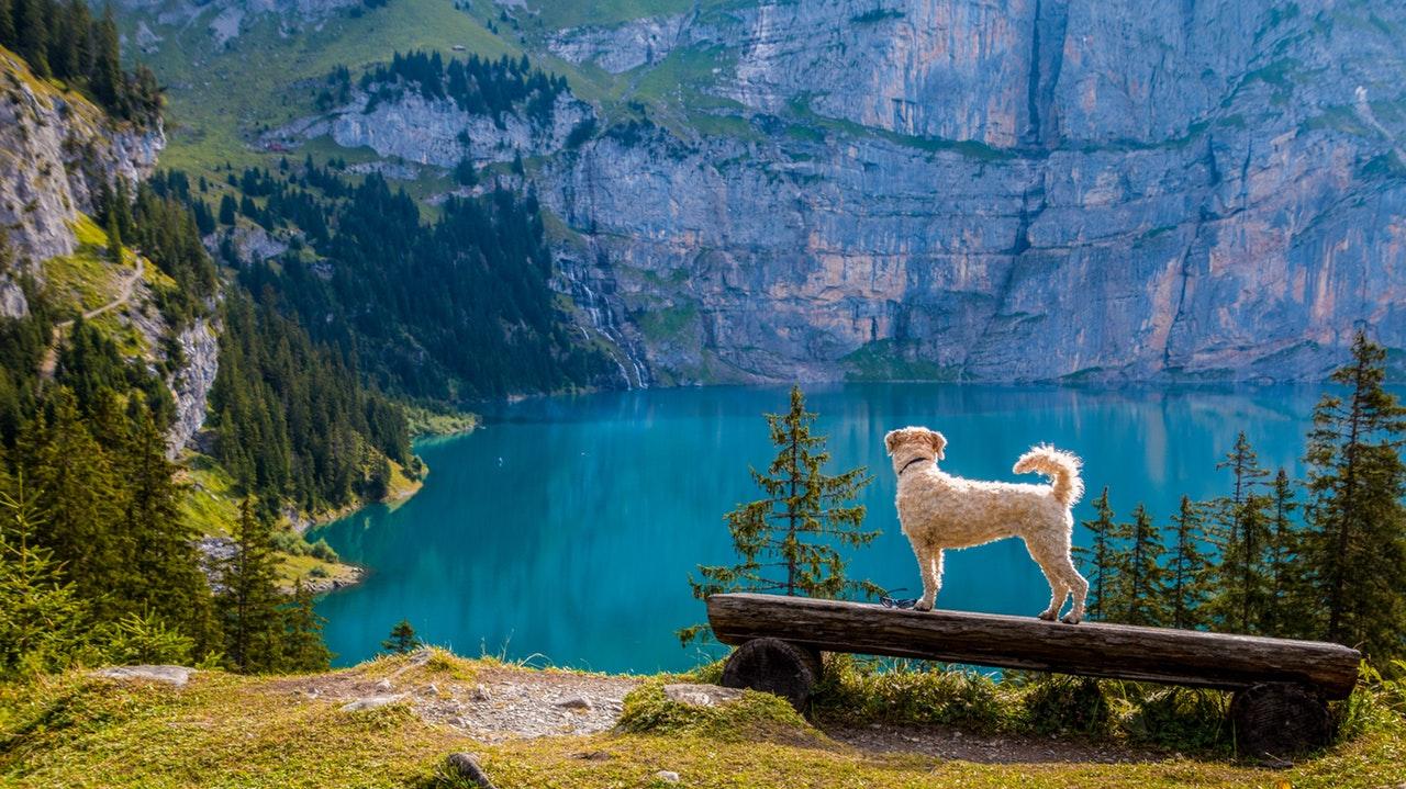 Hund ute i naturen